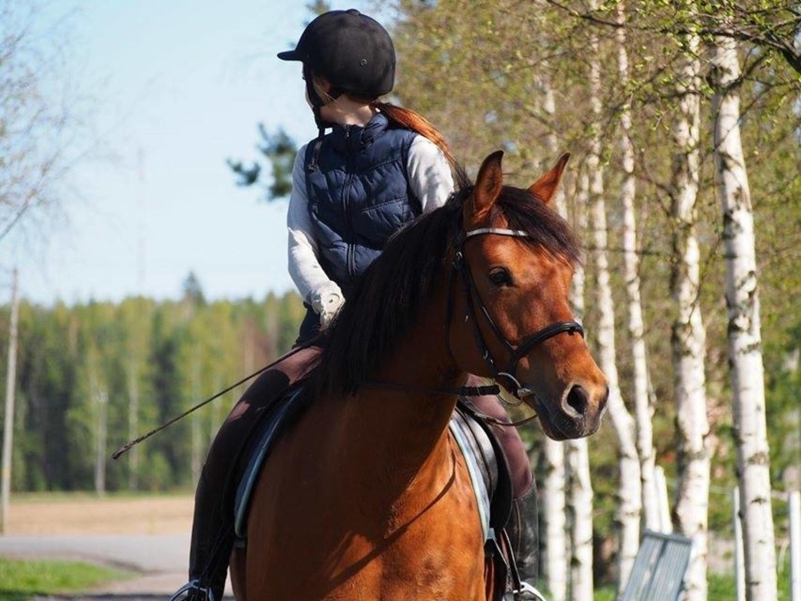 animal-brown-equestrian-2440349